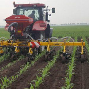 Gras onder maïs loont